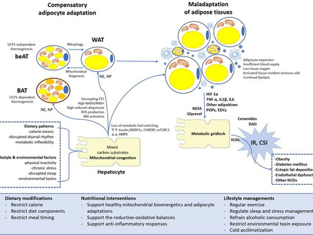 Dietary, nutritional, and lifestyle interventions in adipose tissue adaptation and obesity