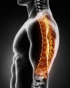 Mid back (Thoracic spine)