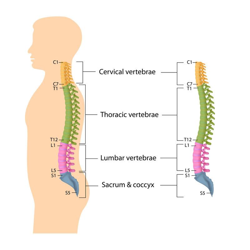 Spinal column segments