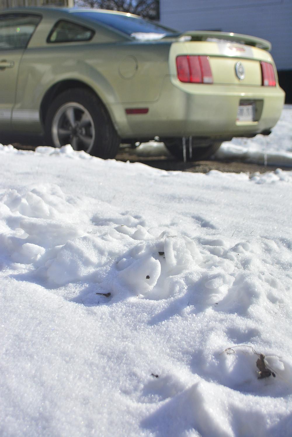 Ohio Toledo snow ice winter Mustang