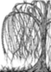 willow tree doodle