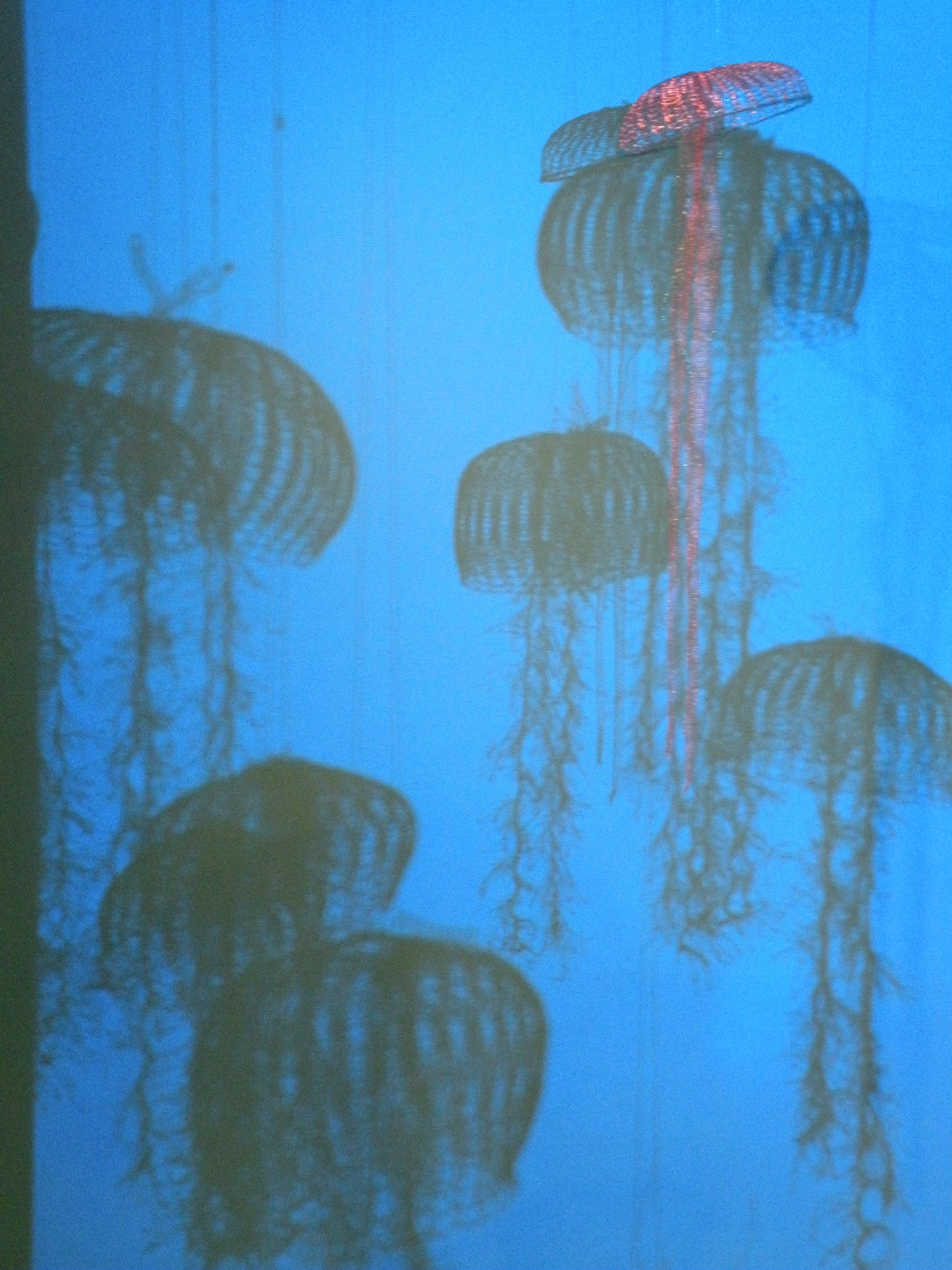 Sea_Jellies_shadows[1]