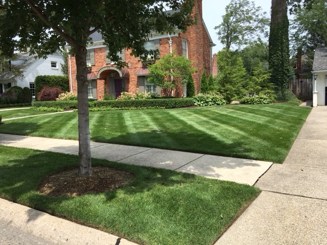 Professional Lawn Maintenance