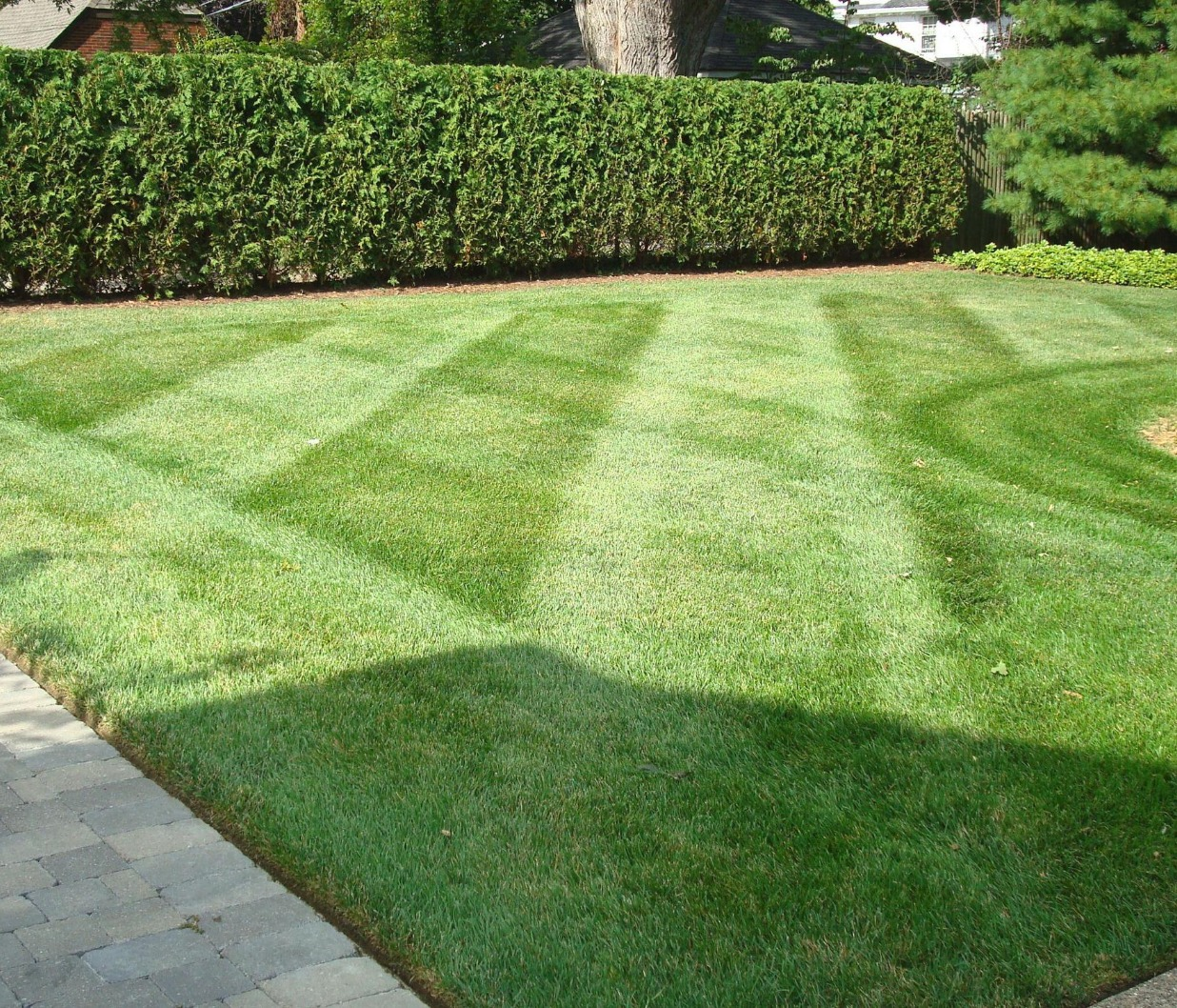 Professional Lawn Maintenance Michig