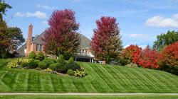 Weekly Lawn & Shrub Maintenance