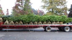 Plant Delivery for Landscape Design