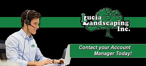 Lucia Landscaping, Commercial Landscaping