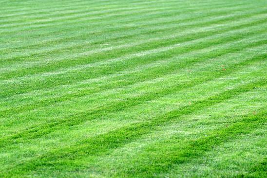Lawn Fertilization Results