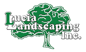 Lucia Landscaping the best Proessional Landscape Services