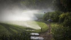 Lighting & Irrigation Professionals