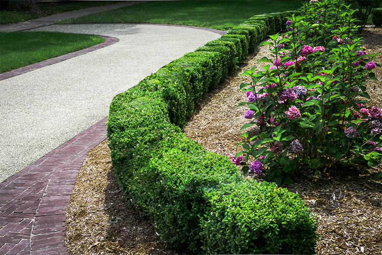 Landscape Maintenance & Shrub Care