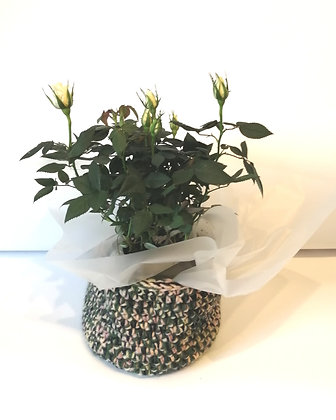 Beautiful green mixed colour basket