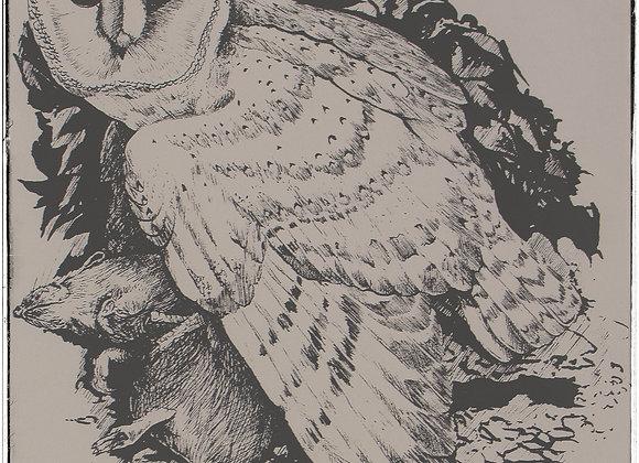 Barn owl ink portrait by Andrew Willis