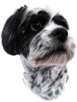 Brewster the dog portrait