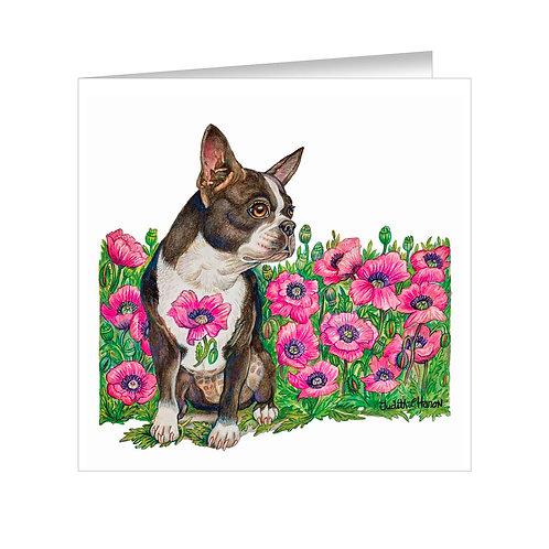 Boston Terrier Item: #073