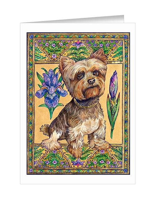 Yorkshire Terrier #037
