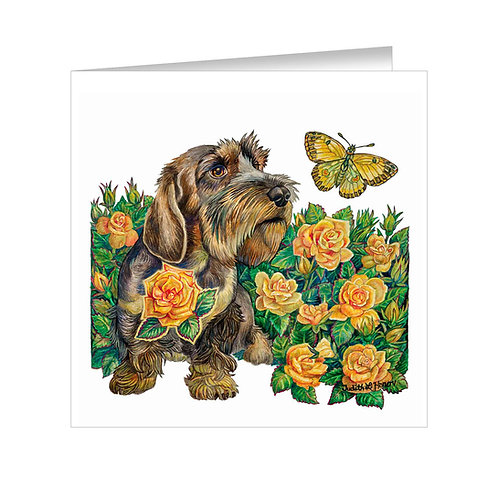Wirehaired Dachahund Item: #072