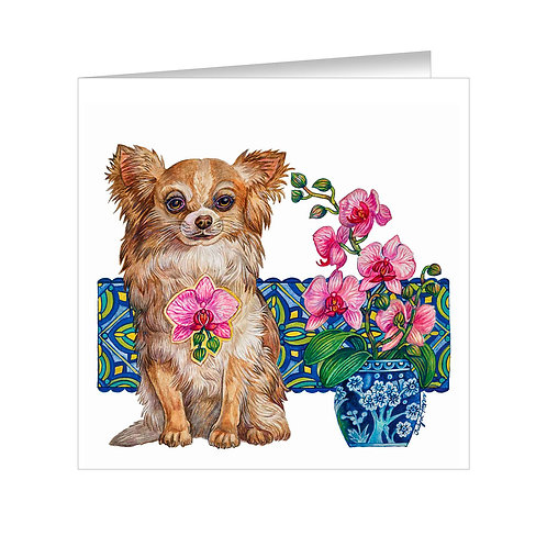 Long-Haired Chihuahua Item:#070