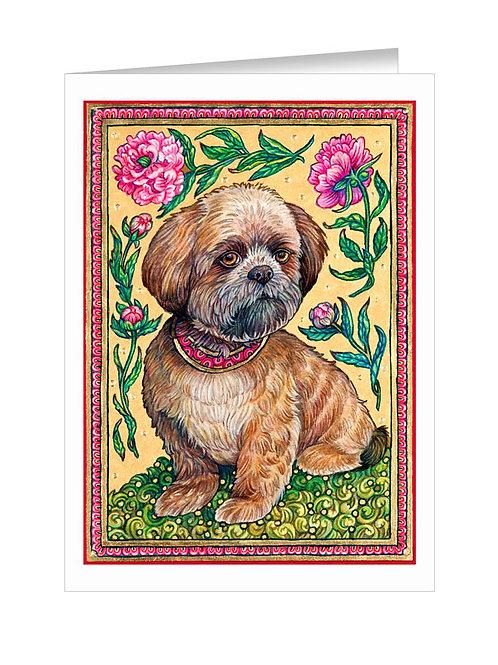 Shih Tzu Puppy #038