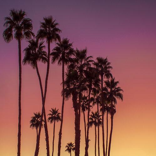 PSP Palms Sunrise
