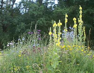Wildblumenwiese_Insekten.jpg