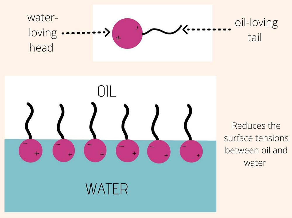 simple surfactant diagram