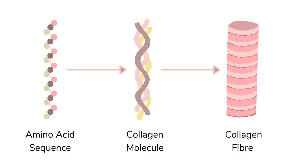 Collagen Molecules Diagram