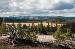Yellowstone Park  019