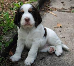 Darcy 6 Wochen alt