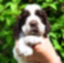 IMG-20200614-WA0046(1).jpg