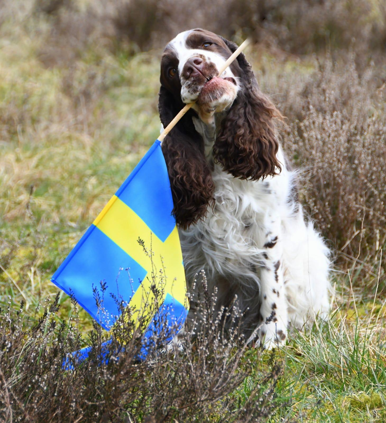 Georgi Schwedenflagge.jpg