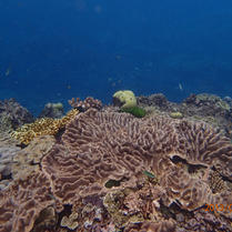 Great Barrier Reef - Coral Reef