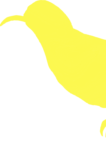 Olive Backed Sunbird_yellow.png
