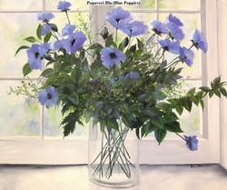 """Blue Poppies"""