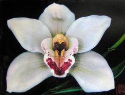 dianas_orchid_EM