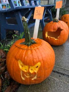Pumpkin 36