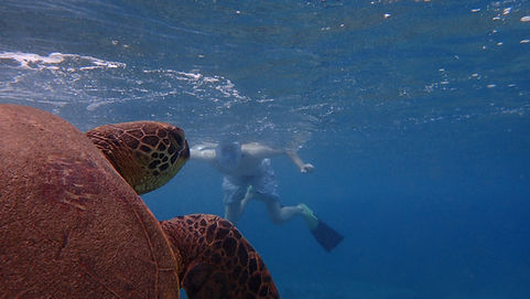 Non Swimmer Snorkeling Tours of West Maui!