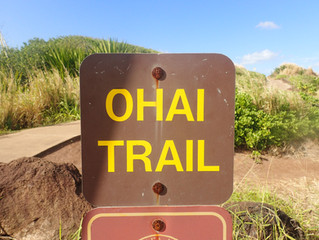 Ohai Trail and overlook Hiking Maui