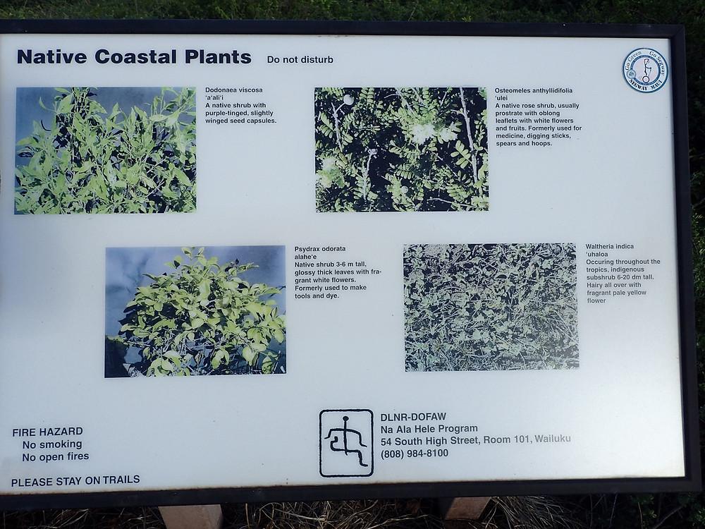 Native plants Ohai trail marker
