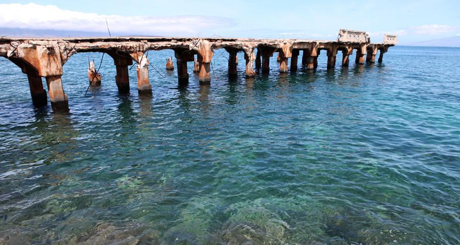 Best Shark Dives of Maui!