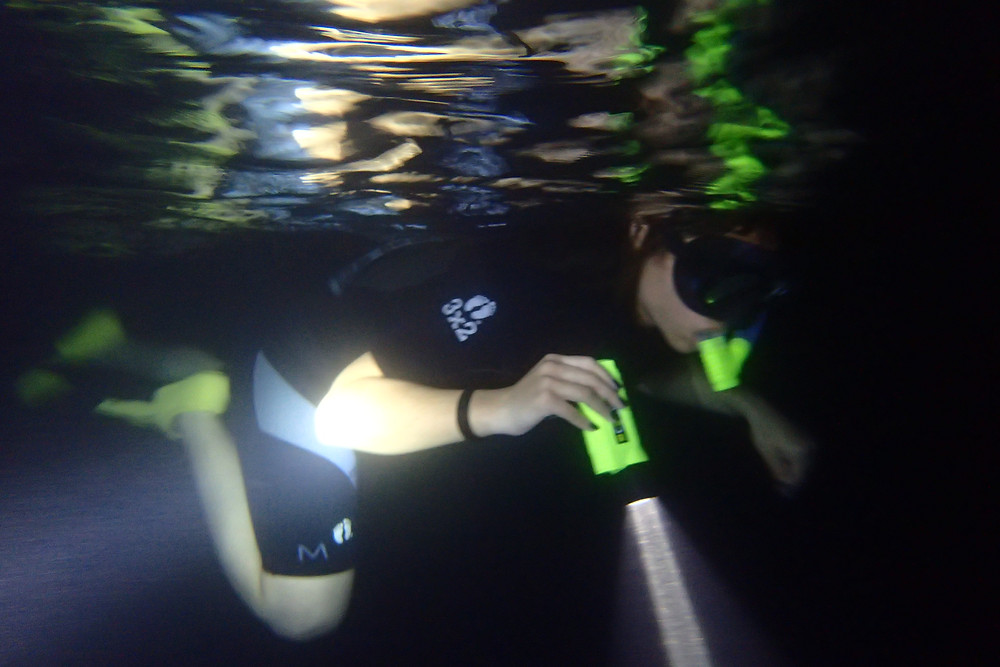 Night Snorkeling in Lahaina!