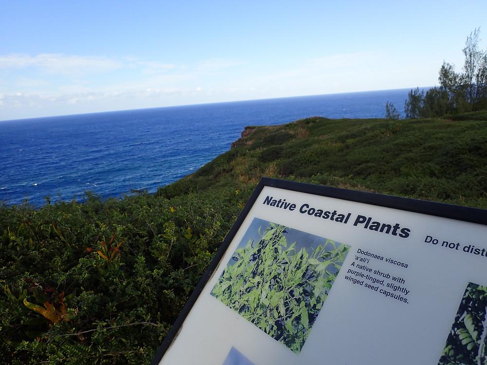 Coastal Plants Maui DLNR, OHAI TRAIL
