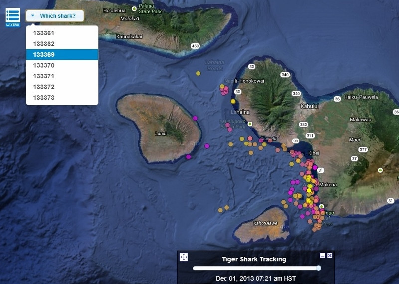 Where are the sharks in Maui?