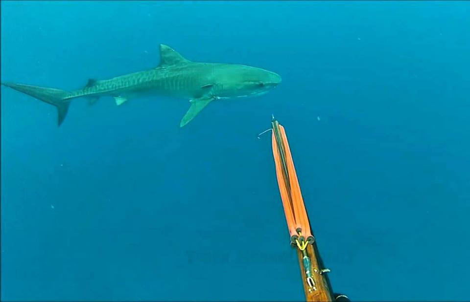 Is it Safe to snorkel in Maui? What about Tiger Sharks?