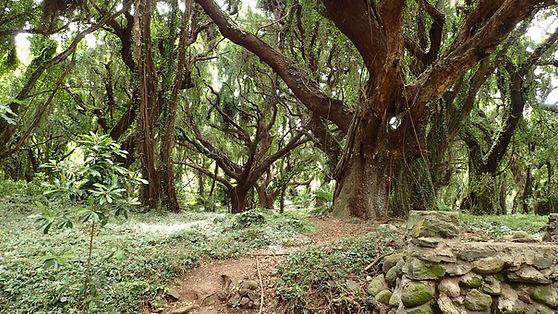 Honolua bay Forest Walk