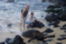 Cruise ship tours Lahaina Maui - Private Tour and Turtle Search