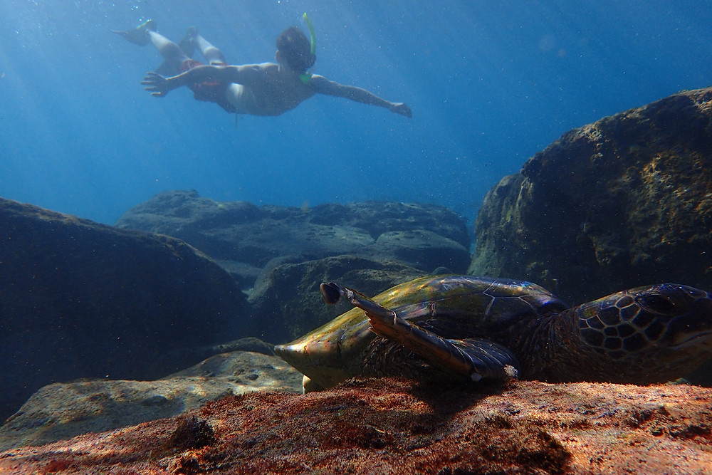 Where to snorkel with turtles in Maui