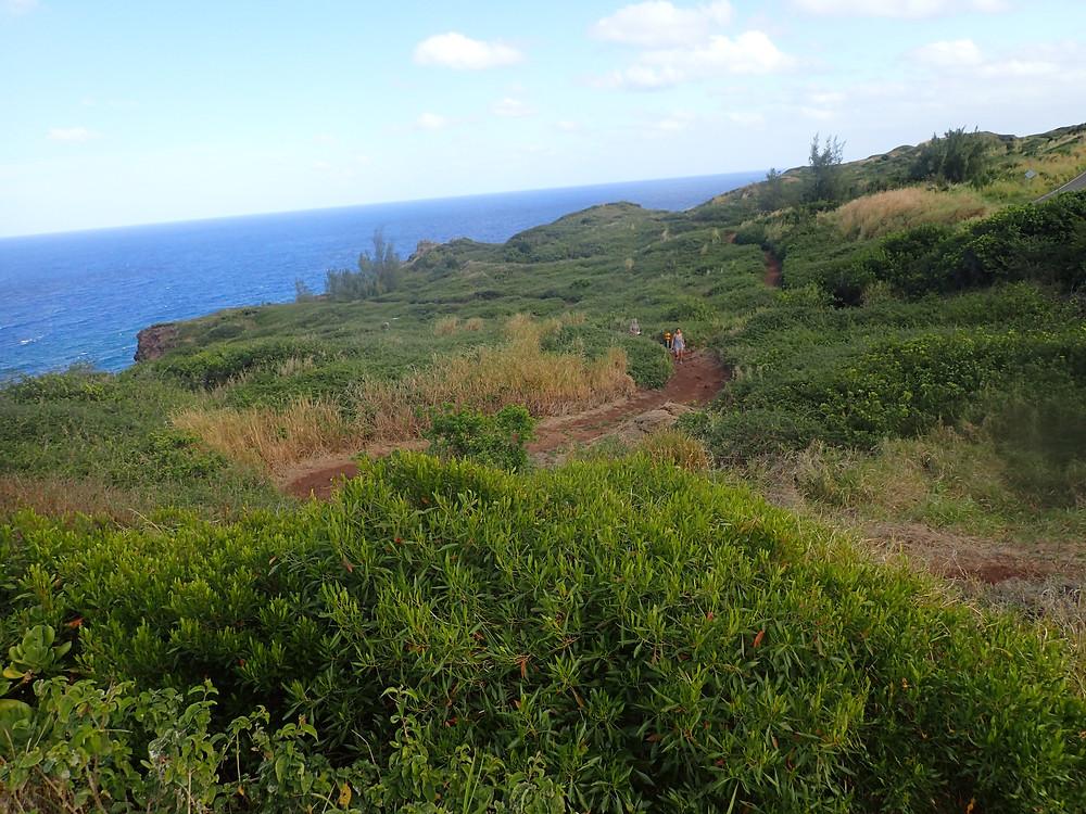 Hiking Maui - Ohai Trail