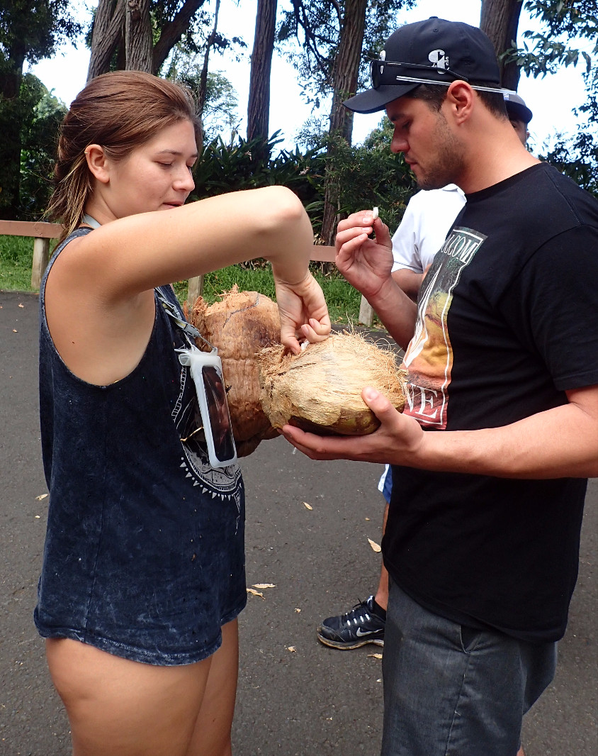 Fresh Coconut's Stop on Road to Hana Tours, Shoreline Snorkel