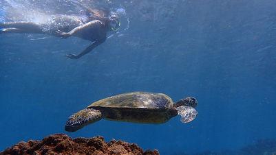 Cruise Ship Snorkeling Tours Lahaina Maui
